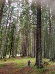 Mojsi az erdőben