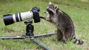 Állati fényképész