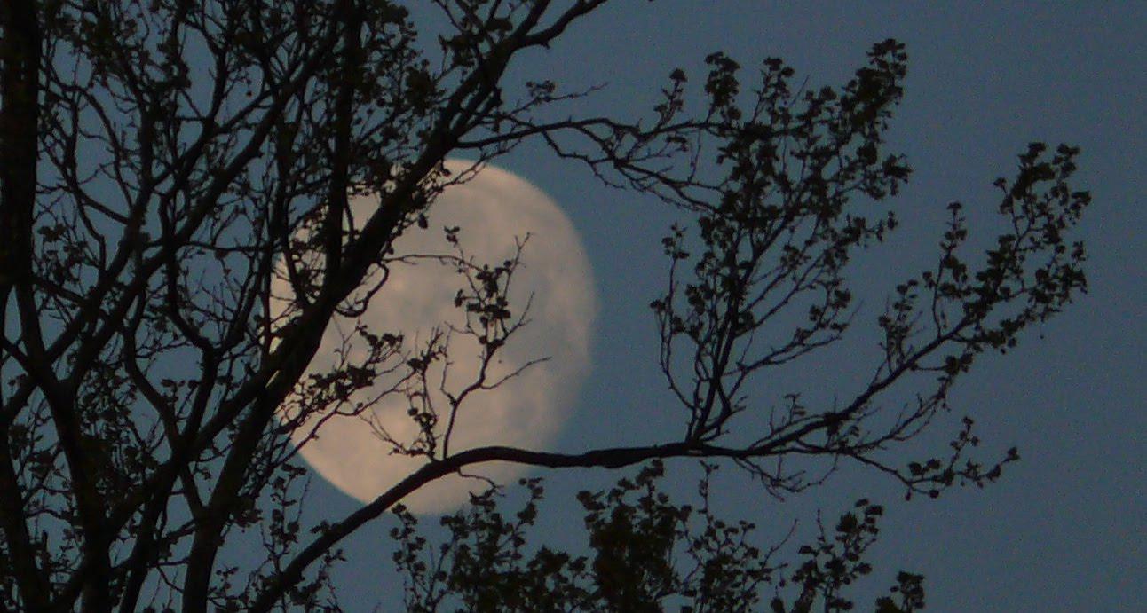 Bámulom a holdat - fotó: Tamás-Haim